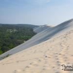 dune du pilat côté forêt