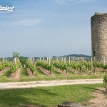 tour vignoble saint-émilion