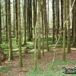 Sentier Karstique - Mérey sous Montrond