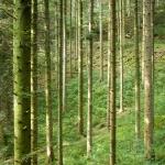forêt près de la Source du Lison